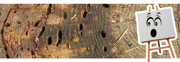 tableau-art-insectes-bois
