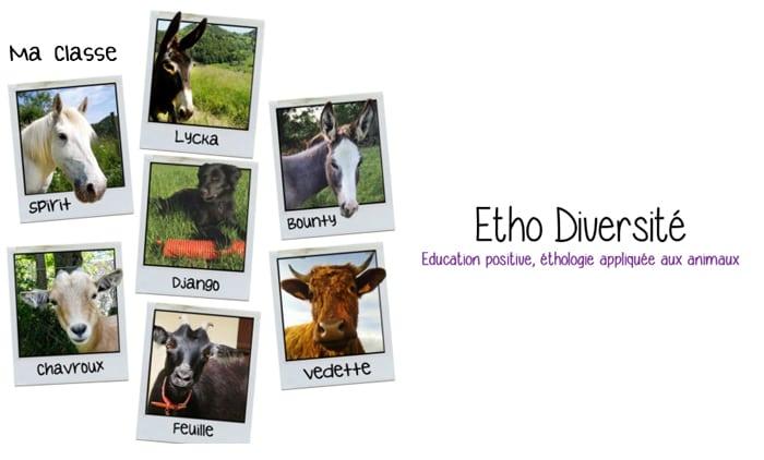 ethologie-diversité-animal-chevre-vache-cheval
