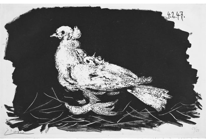 piccaso-pigeon