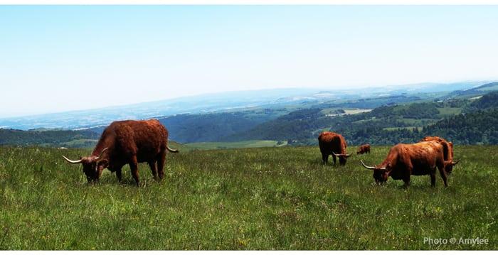 salers-cantal-auvergne-vacances-randonnées