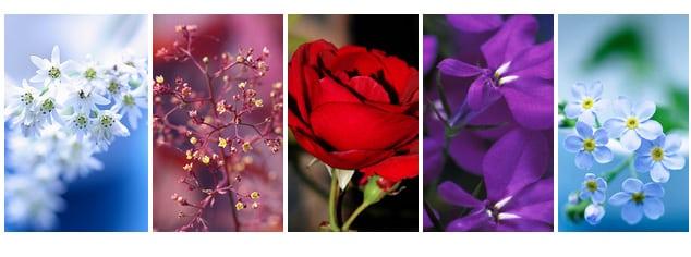 couleurs-images